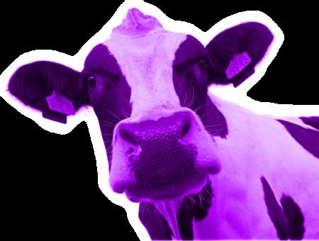 A Vaca Roxa e como Ser uma Referência na sua Empresa